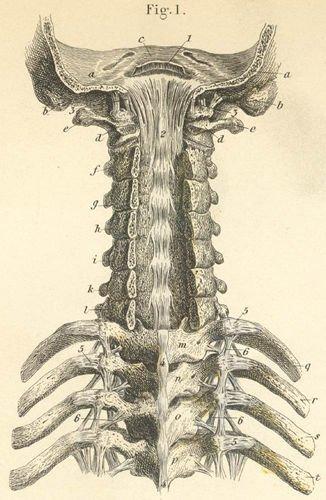 boulderchiropractor