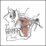 Temporomandibular Joint Evaluation